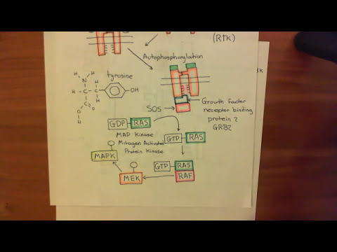 p53 and The Response to Mitogen Overactivity Part 3