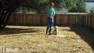 Good Dog Training Center With Chopper