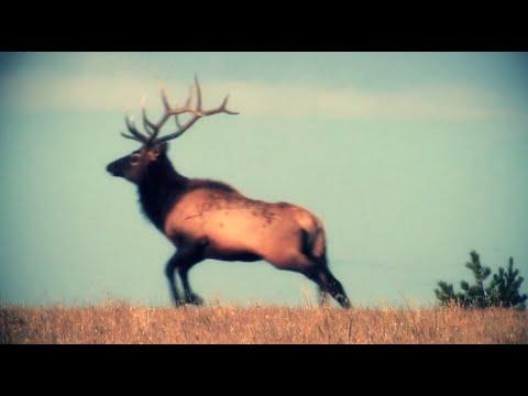Archery Elk Kill Shots