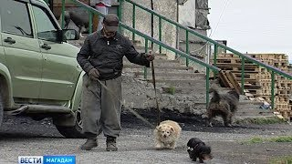 Бродячих собак отлавливают на Марчекане