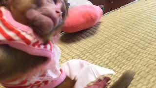 Cute primate baby scolded by human mum