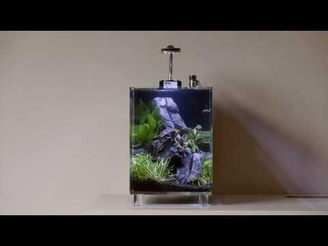 Betta Cube nano tank set-up