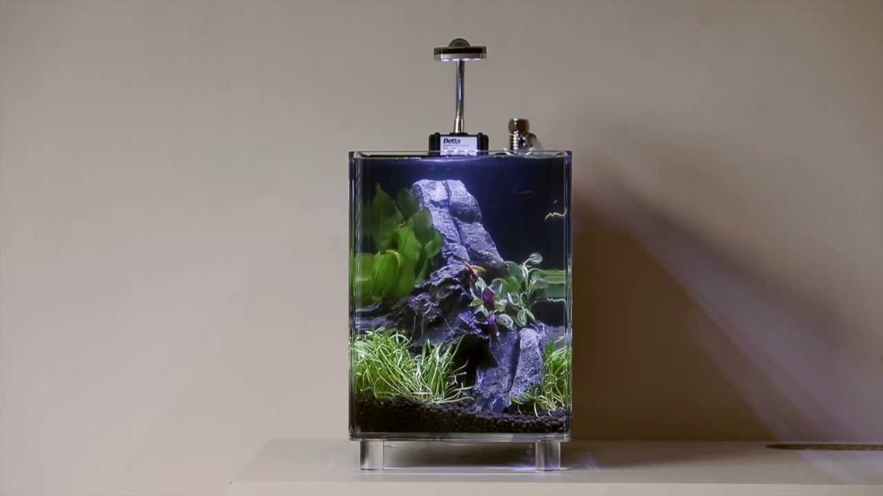 Betta Cube Nano Tank Set Up Youtube