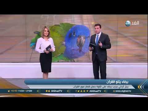 ببغاء يتلو القرآن /  Loro recita el Corán/ Parrot recite the Koran سبحان الله