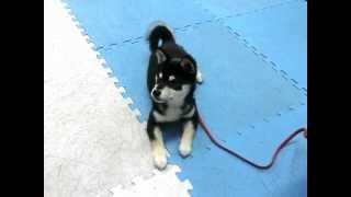 犬のしつけ方教室 ベーシックコース 1日目に参加しました。