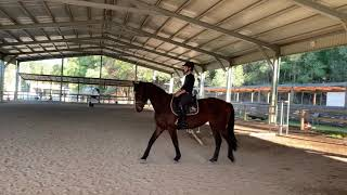Savvy WB mare for sale