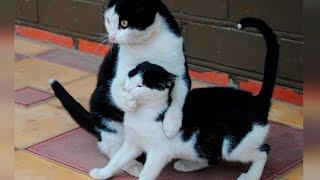 Свежая подборка, Смешные видео с животными 2016