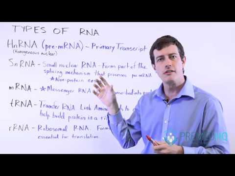 5 Types of RNA: mRNA, tRNA, rRNA, HnRNA, and SnRNA