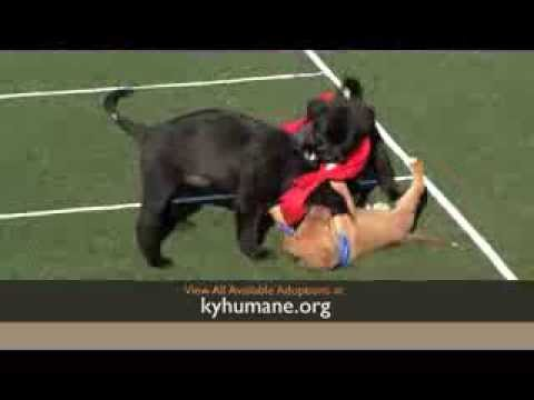 Kentucky Humane Society Puppy Playoff, 2014