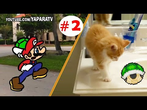 Super Mario Bros and Funny animals part 2 – Cats and dogs fail compilation