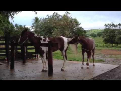 Fotos de cavalos cruzando com eguas 88