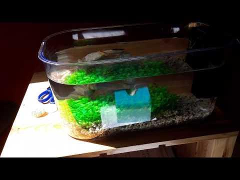 Prix aquarium 2 poison betta combattant youtube for Aquarium prix