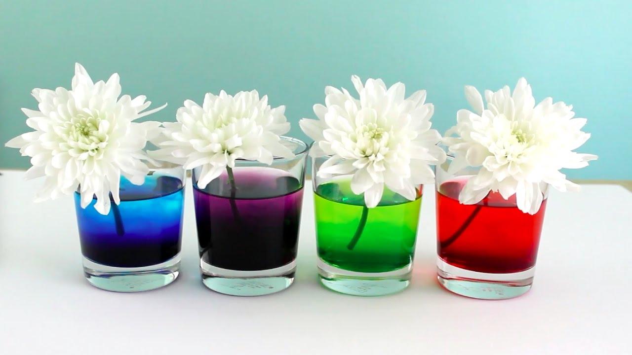 Como Teñir Flores Naturales con Colorante de Comida   Experimento ...