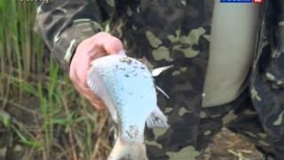 Рыбалка в Крыму.(, 2014-06-21T17:49:53.000Z)