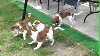 Jun.30.2012 コイケル くるみとハンスの兄弟姉妹の再開。