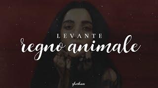 Levante Regno animale MP3
