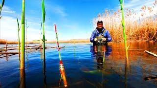 Караси-КАБАНЫ на поплавок в диких местах. Рыбалка на поплавок