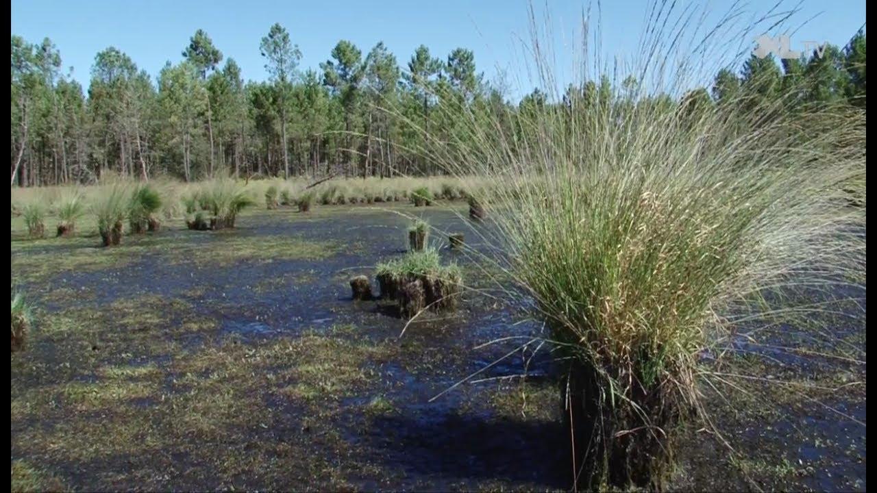 Les collégiens à la découverte des lagunes des Landes