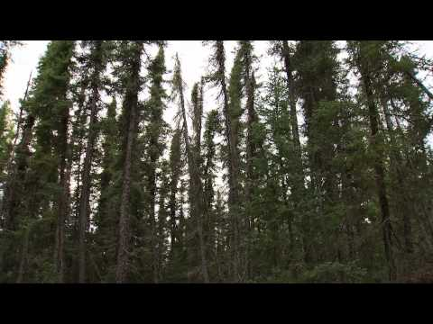 Boreal Forest Research Site - Saskatchewan River Basin