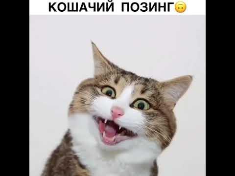 Кошачий позинг 🤪