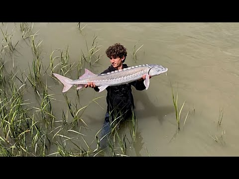 Delta Fishing For GIANTS | WHITE STURGEON