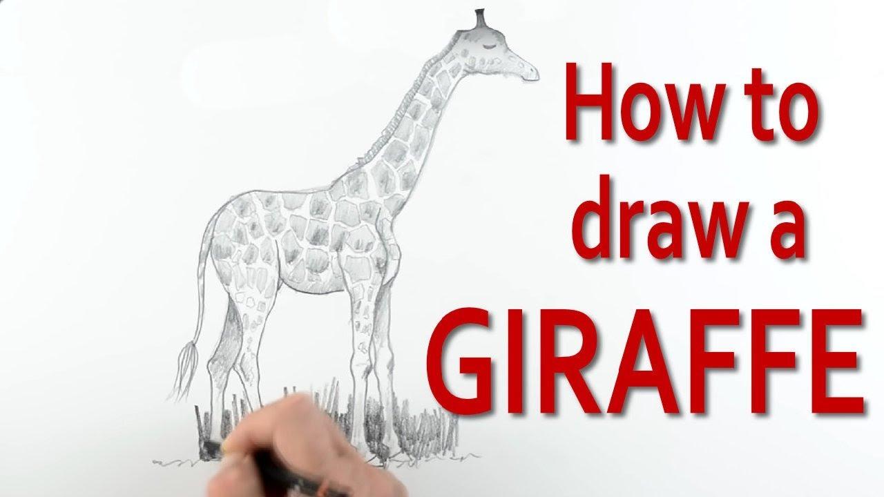 how to draw a giraffe youtube