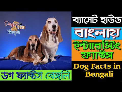 Basset Hound Dog Facts in Bengali | Small Dog | Dog Facts Bengali