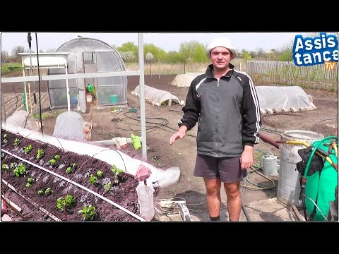 Сад и Огород / Капельный полив из ПВХ труб для теплички с рассадой