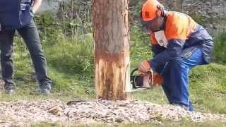 Лучший вальщик леса 2014 Валка