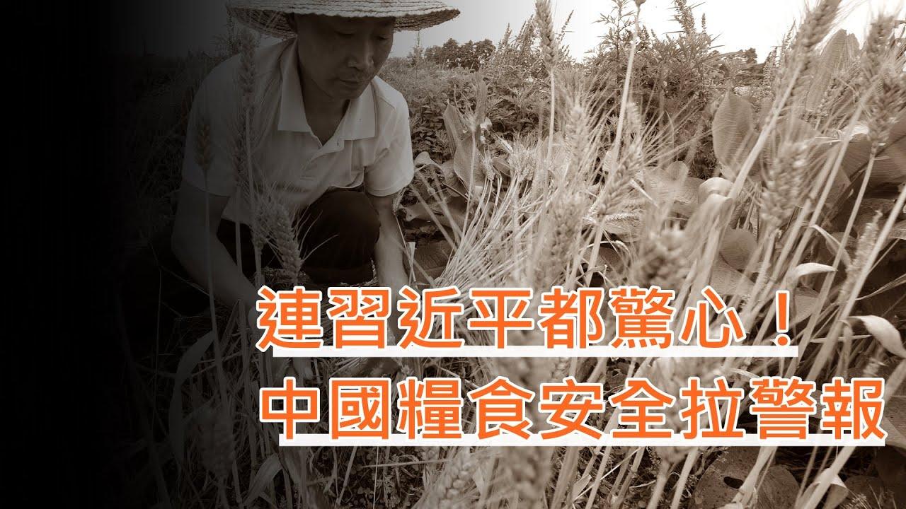 LTN經濟通》連習近平都驚心! 中國糧食安全拉警報