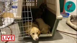 The puppies are safe now - Takis shelter