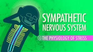 Sympathetic Nervous System: Crash Course A&P #14