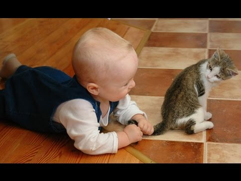 Kittens and Babies Playing Together Compilation (2014)