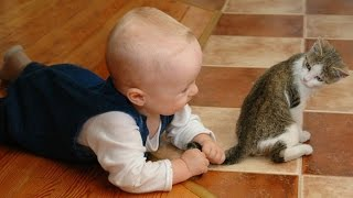 Kittens and Babies Playing Together Compilation