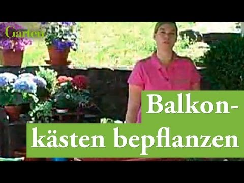 gartentipp balkonk sten bepflanzen youtube. Black Bedroom Furniture Sets. Home Design Ideas