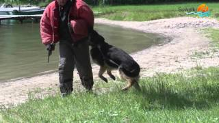 Jak obronić się przed agresywnym psem. Zobacz, jak radzą sobie z nimi eksperci