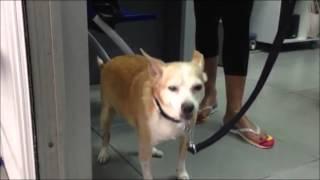 chronic bronchitis - dog