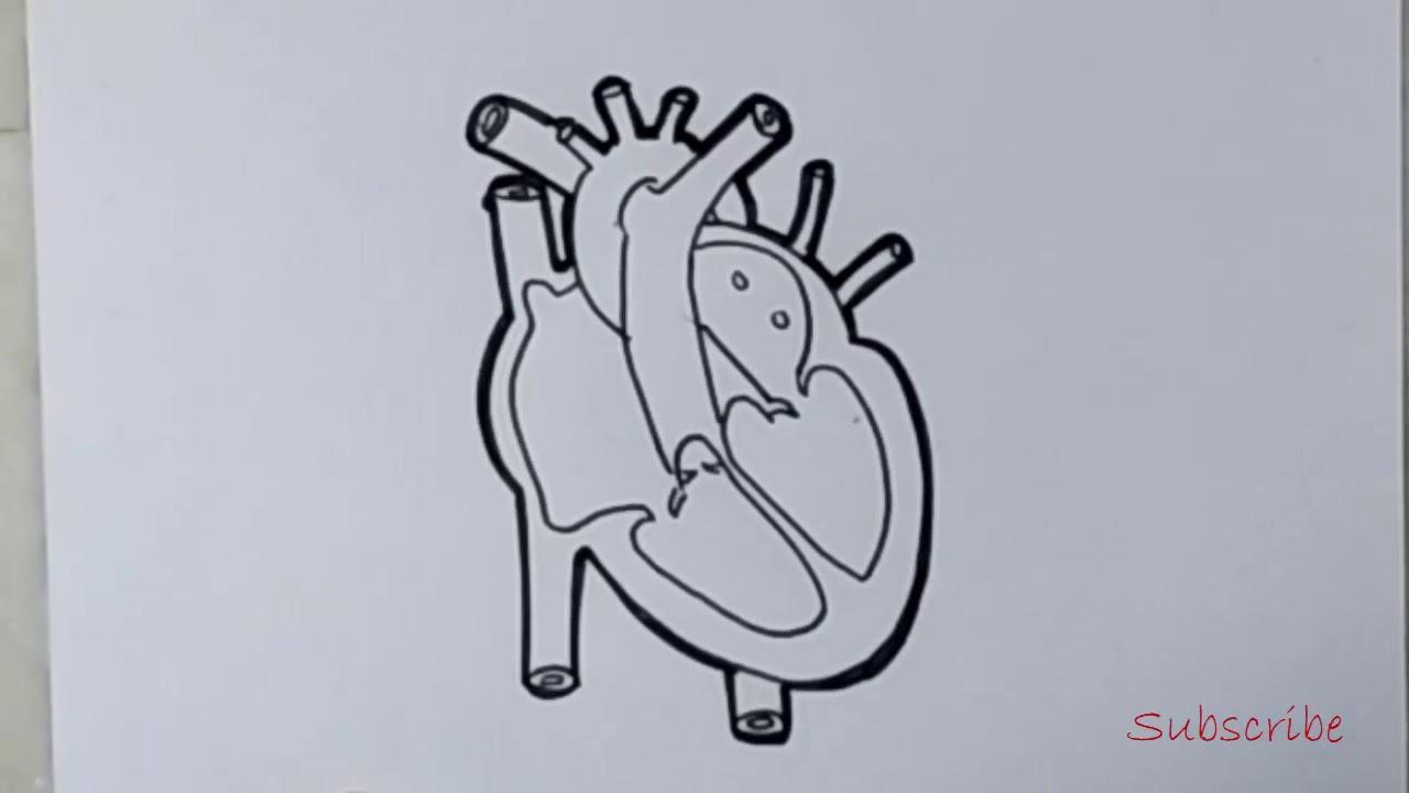 human heart diagram for class 10 easy | artistica - YouTube