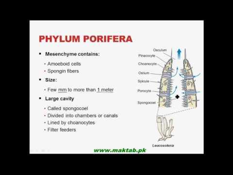 FSc Biology Book1, CH 10, LEC 4: Phylum...