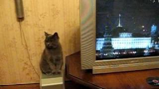 Британский кот и гимн России