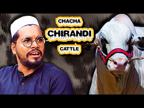 Chacha Chirandi Cattle