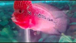 AQUARIUM ROOM!!! AMAZING TANKS WITH COLOURFUL PINK FISHES