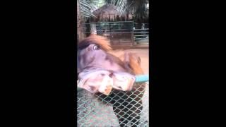 Horses Make Funny Faces