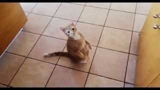 CAT GETS SCARED BY TOASTER