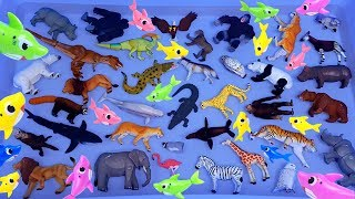 Lots of Animals Toys, Zoo animals Sea animals Farm animlas, dinosaurs & Learn animals names