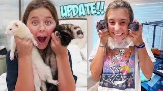 A DAY IN THE LIFE WITH 19 PETS!!