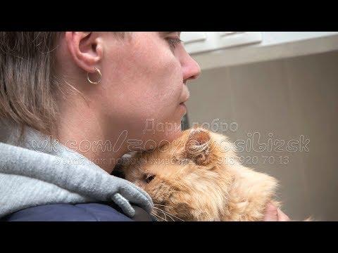 Волонтеры ухаживают за тяжело больным котом в ветеринарной клинике Приют для животных Дари добро