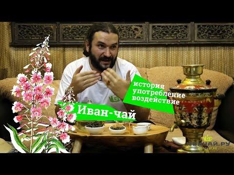 Иван-чай. История, употребление, воздействие. (Кипрей узколистный, копорская трава)