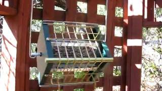 Roller Feeder Spinning & Rolling Squirrel Proof Bird Feeder How It Works?
