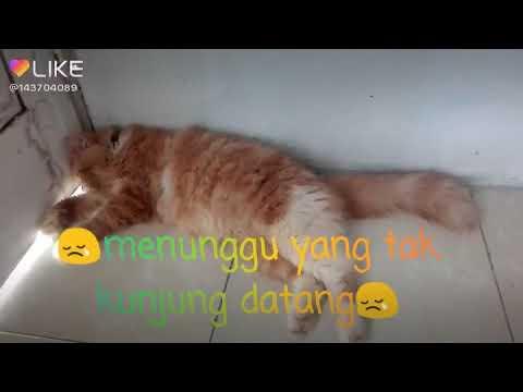 Unduh 89+  Gambar Kucing Lucu Lagi Sedih Paling Baru HD